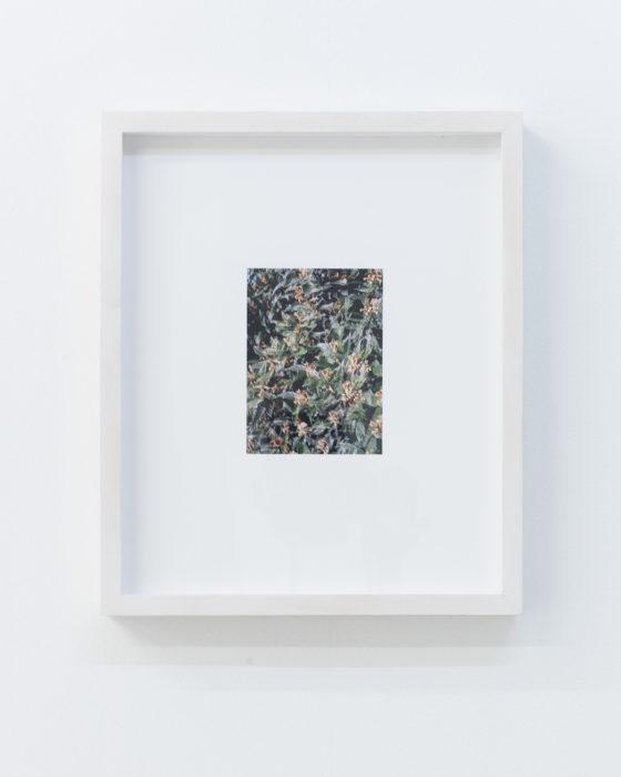 Nicholas Gottlund - Double Loquat - 2013 - C-print 12x9 cm image 30,5x25,5 cm sheet